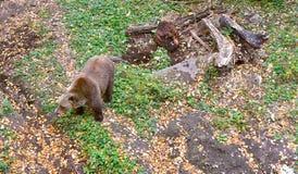 熊城堡室外捷克克鲁姆洛夫 图库摄影