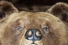 熊头 免版税库存照片
