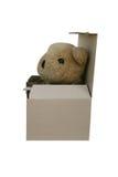 熊孤立 免版税库存图片