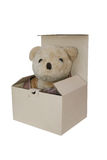 熊孤立 库存图片