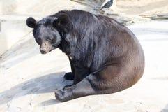 熊就座 库存图片