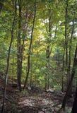 熊山森林 库存图片
