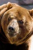熊微笑 库存图片