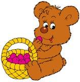 熊成熟浆果的崽 免版税库存图片