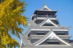 熊本城堡在与美好的银杏树黄色的秋天离开和b 免版税库存图片