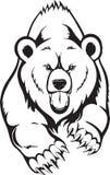 熊棕色北美灰熊 库存图片
