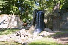 熊棕色瀑布 免版税库存照片