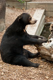 熊棕色逗人喜爱 库存图片