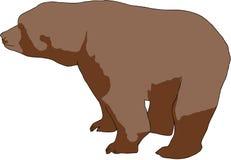 熊棕色通配 皇族释放例证