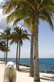 熊概念全球极性温暖 免版税图库摄影