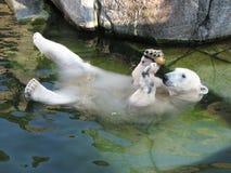 熊浮动的冰 免版税库存照片