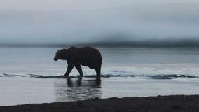 熊渔 影视素材