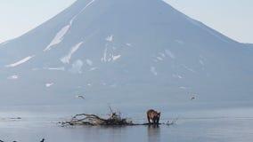 熊渔 股票视频