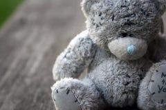 熊灰色小 库存照片