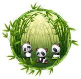 熊猫充当竹子 皇族释放例证