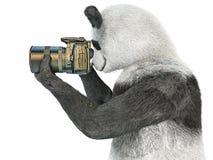 熊猫字符摄影师照相机采取图片被隔绝的背景3d cg回报例证 免版税图库摄影