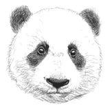 熊猫手拉的画象  在白色背景隔绝的黑白传染媒介乱画 库存图片