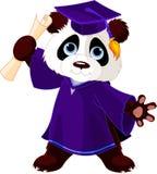 熊猫毕业生 皇族释放例证