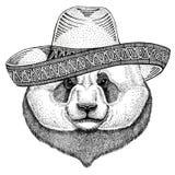 熊猫,竹熊野生动物佩带的阔边帽墨西哥节日墨西哥党例证狂放的西部 库存图片