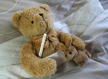 熊病残 库存图片