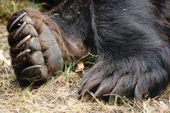 熊的脚 库存图片