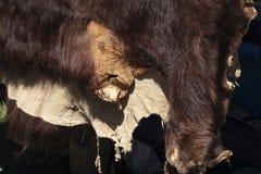 熊皮 免版税库存照片
