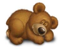 熊睡眠 免版税库存图片