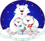 熊系列 免版税图库摄影