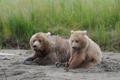 熊醒来休息的时间  库存照片