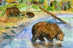 熊钓鱼 免版税库存图片