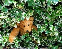 熊隐藏 免版税库存照片