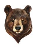熊顶头水彩 皇族释放例证