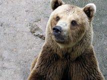 熊题头  免版税库存照片