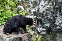 熊马来亚星期日 免版税图库摄影