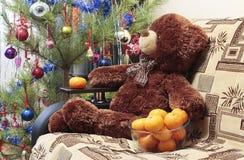 熊,圣诞树,蜜桔 免版税图库摄影