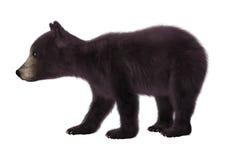 熊黑色崽 库存图片