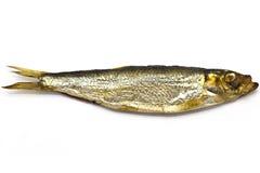 熏制的欧洲西鲱(Sprattus sprattus) 库存照片
