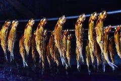 熏制的鱼鳗鱼鲱鱼 免版税图库摄影