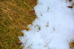 熔化在草的雪 免版税图库摄影