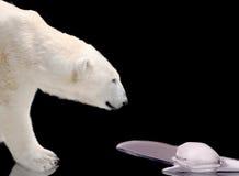 熔化极性注意的熊冰 库存照片