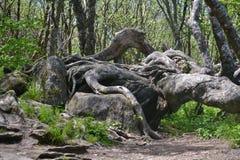 熔化树 库存照片