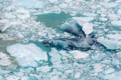 熔化的冰山 免版税库存图片