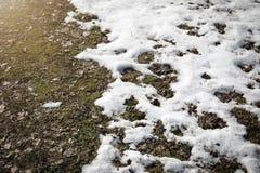 熔化的雪在春天一棵老草和叶子在它下 库存照片
