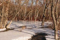 熔化的雪在森林 免版税库存照片