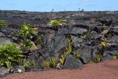 熔岩岩石成长 图库摄影
