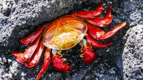 熔岩岩石的萨莉Lightfoot 免版税图库摄影