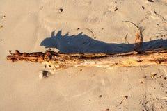 熔铸变色蜥蜴类型shdow的漂流木头 图库摄影
