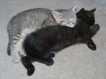熟睡两只的小猫(猫属catus) 免版税库存图片