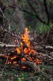 燃烧的分支和木柴在晚上 库存图片