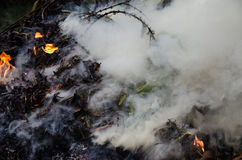 燃烧的叶子&烟1 库存照片